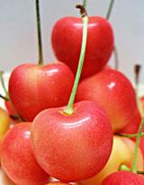 cherries160.jpg